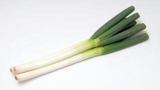 春まき・秋まきネギの育て方 〜畑・プランター栽培方法や害虫・病気について〜