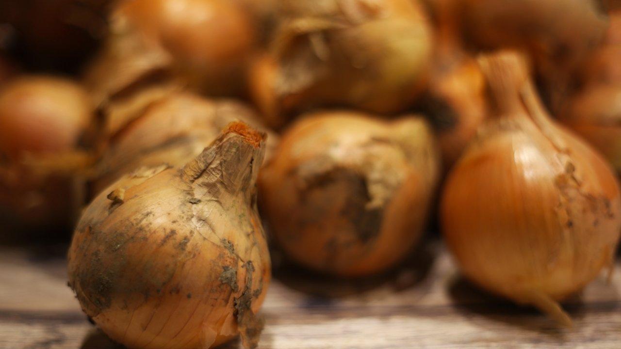 玉ねぎの種まき〜収穫までの育て方!病気や害虫対策についてもご紹介