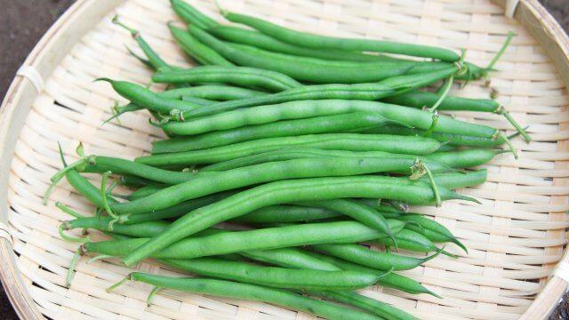 インゲンの種まき〜収穫までの育て方!栽培時期や病気・害虫の対策