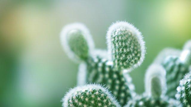 サボテンの種からの育て方!育てる時期や病気の対策について