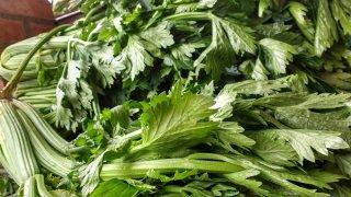 セロリの種まき〜収穫までの育て方!栽培時期や病気・害虫の対策など