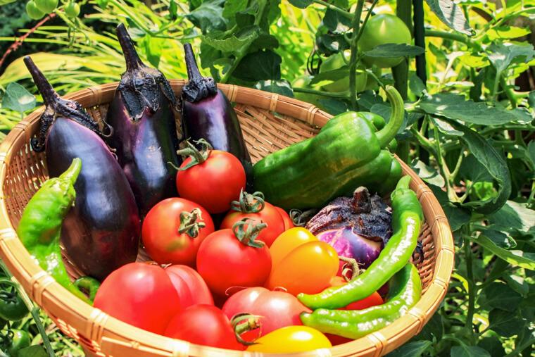 夏が旬の野菜とは?家庭菜園のおすすめもご紹介!