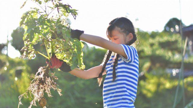 初心者でも野菜を育てられる?シェア畑のメリット・デメリットをご紹介!