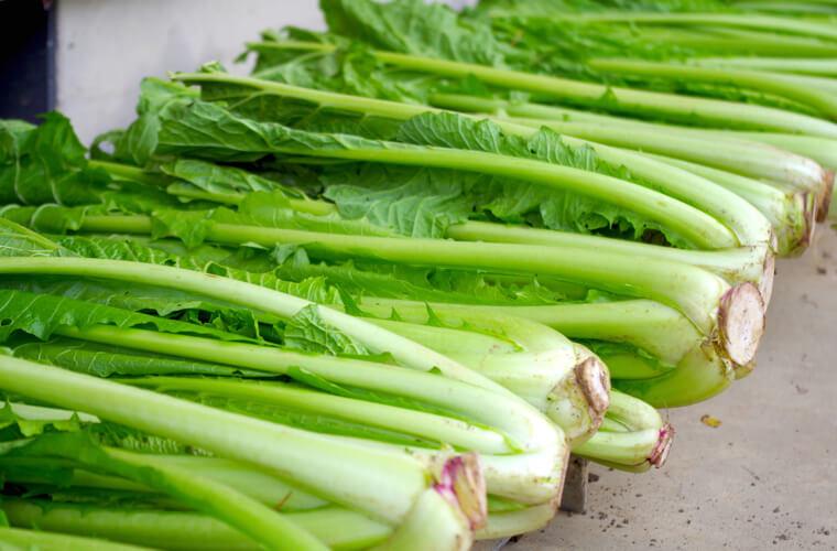 野沢菜の収穫までの育て方!栽培時期や病害虫の対策など