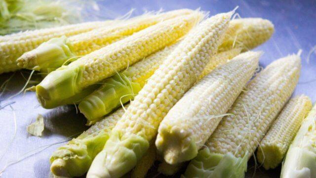 ヤングコーンの種まき〜収穫までの育て方!栽培時期や病害虫の対策など