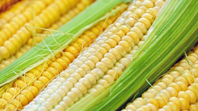 トウモロコシの賞味期限、選び方・見分け方、保存方法