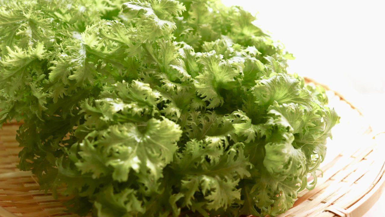 からし菜の種まき~収穫までの育て方!栽培時期や病害虫対策など