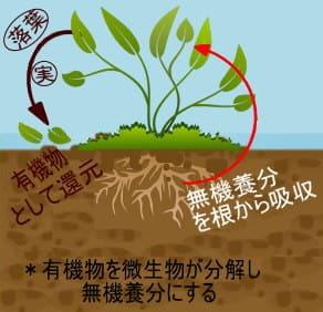 微生物による自然のサイクル